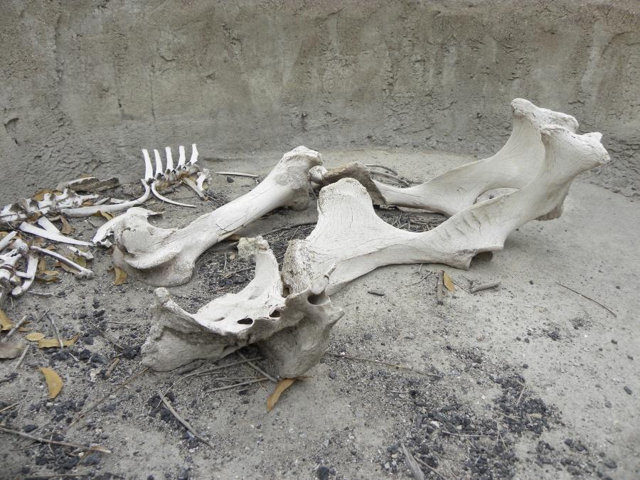 Bones inside the cistern.