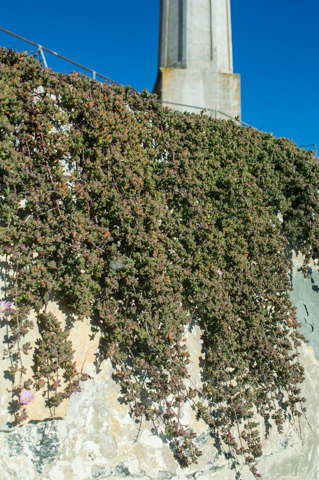 alcatraz-garden-3