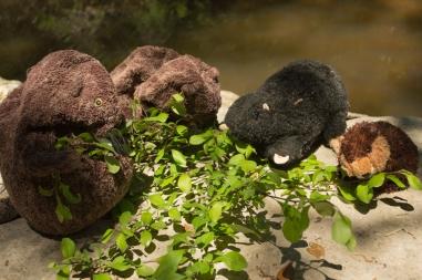 beavers-of-slaughter-creek