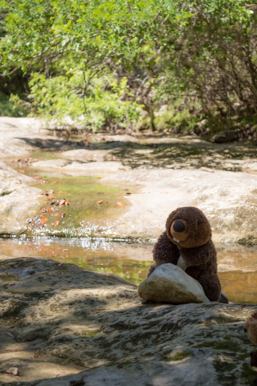 beavers-of-slaughter-creek2