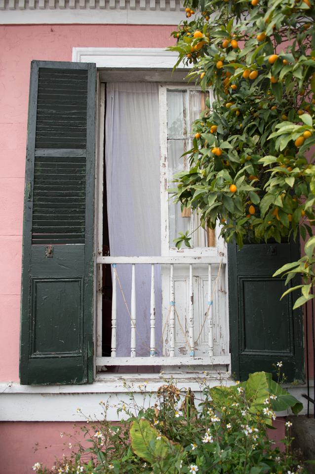 pink-house-orange-kumquats-web