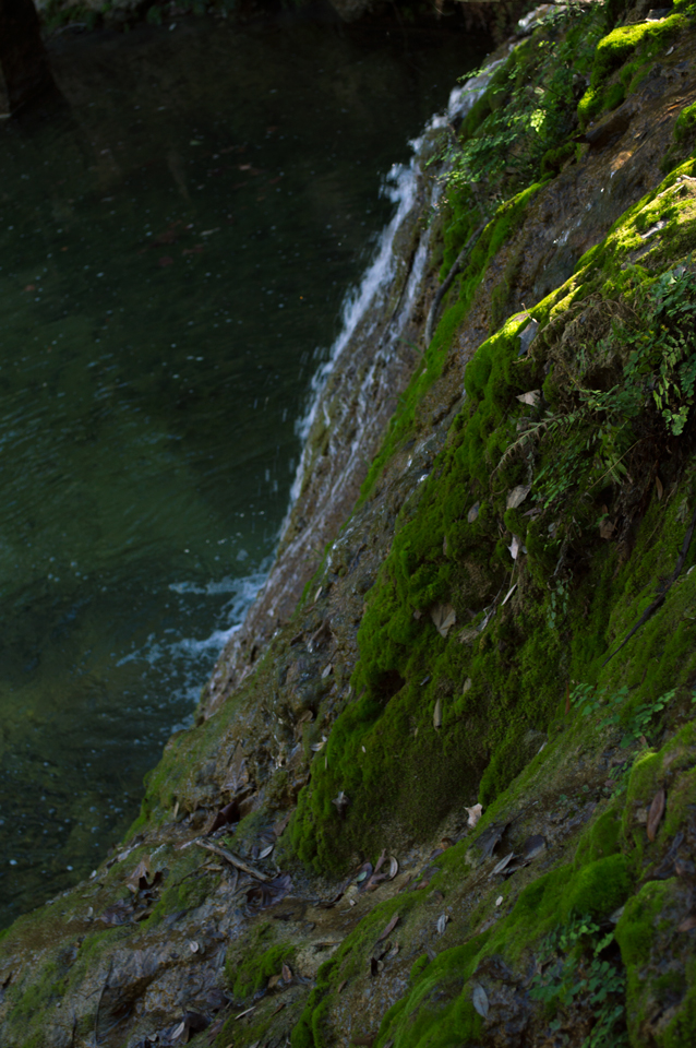 vertical-waterfall-moss-web